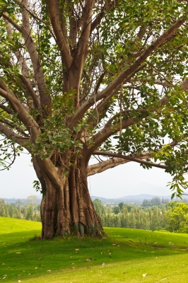 les arbres montent au ciel